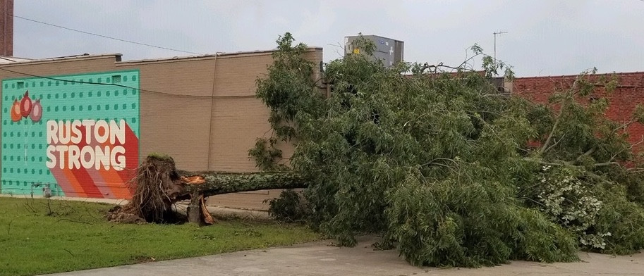 Ruston stayed strong, but this tree behind JACO Federal Credit Union on Vienna Street failed to remain upright during the heavy winds brought by Hurricane Laura on Thursday.