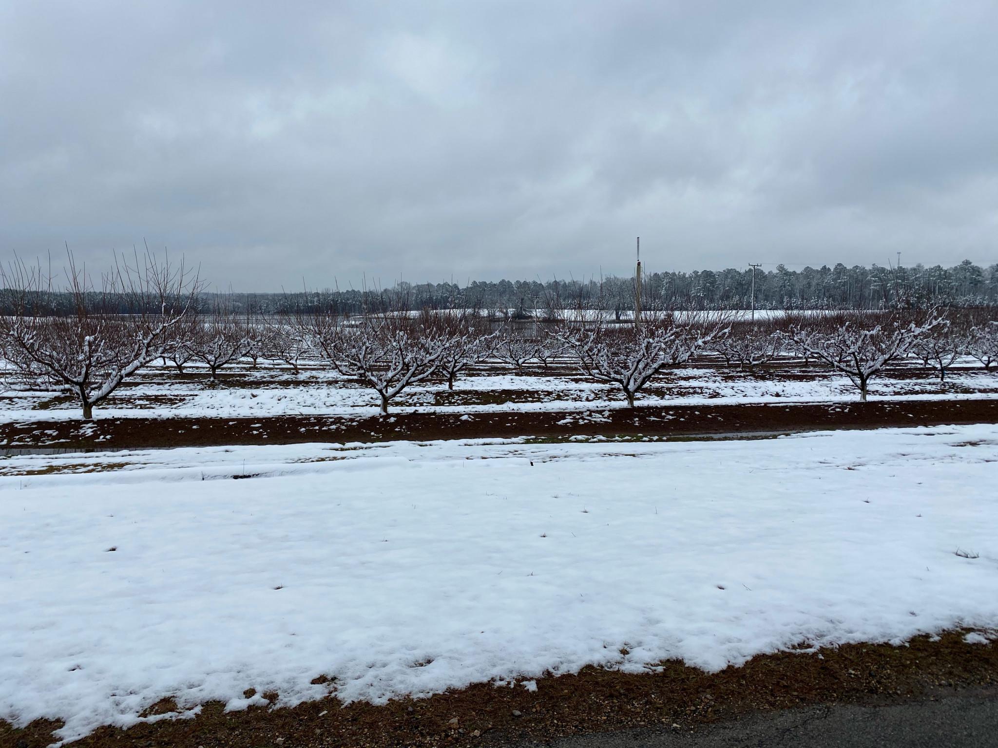 The Ruston Peach Orchard