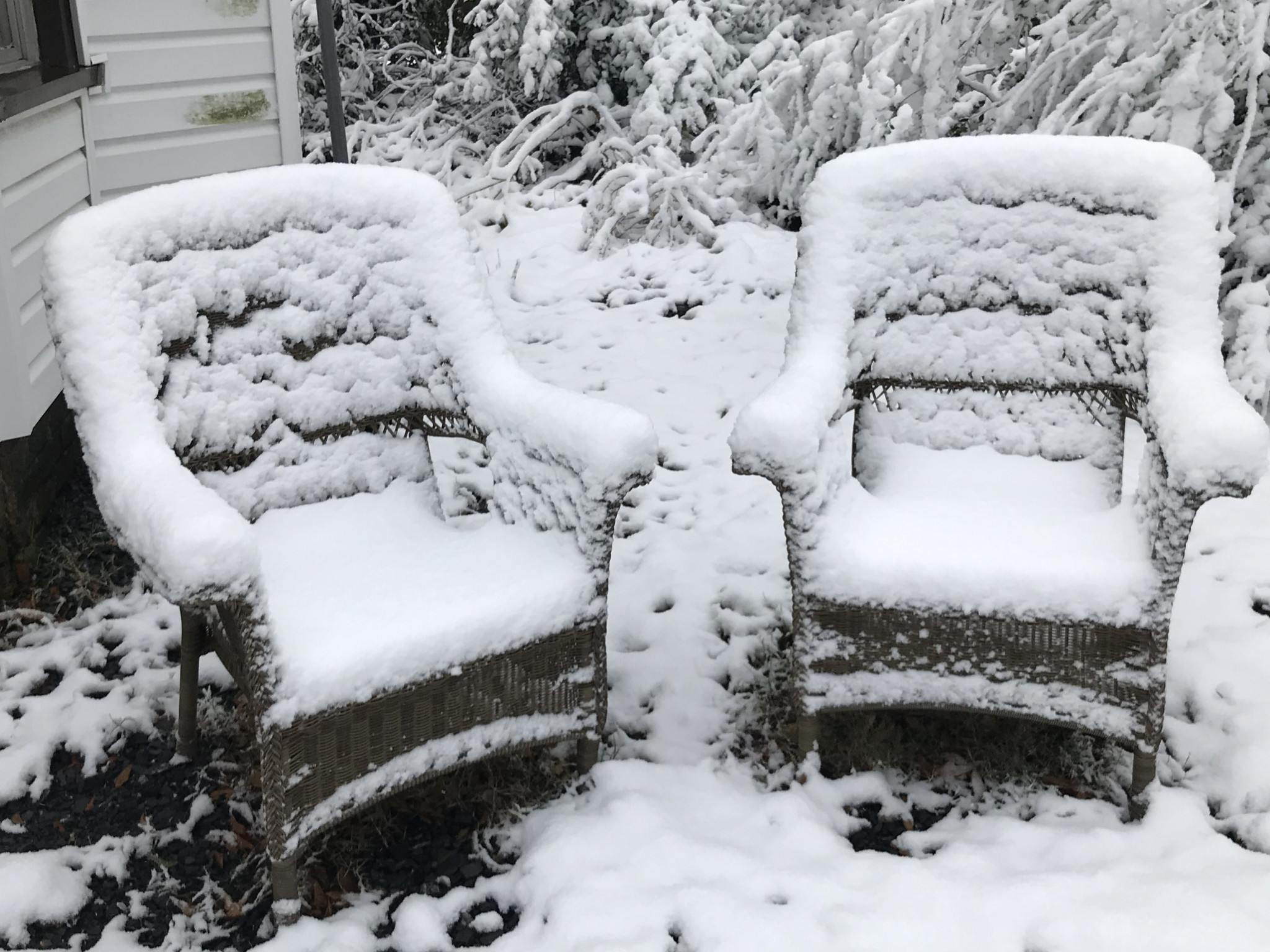Some frosty chairs on an Evans Street lawn - Leader photo by Caleb Daniel