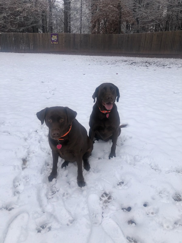 More dogs from Kevin and Jenny Crume
