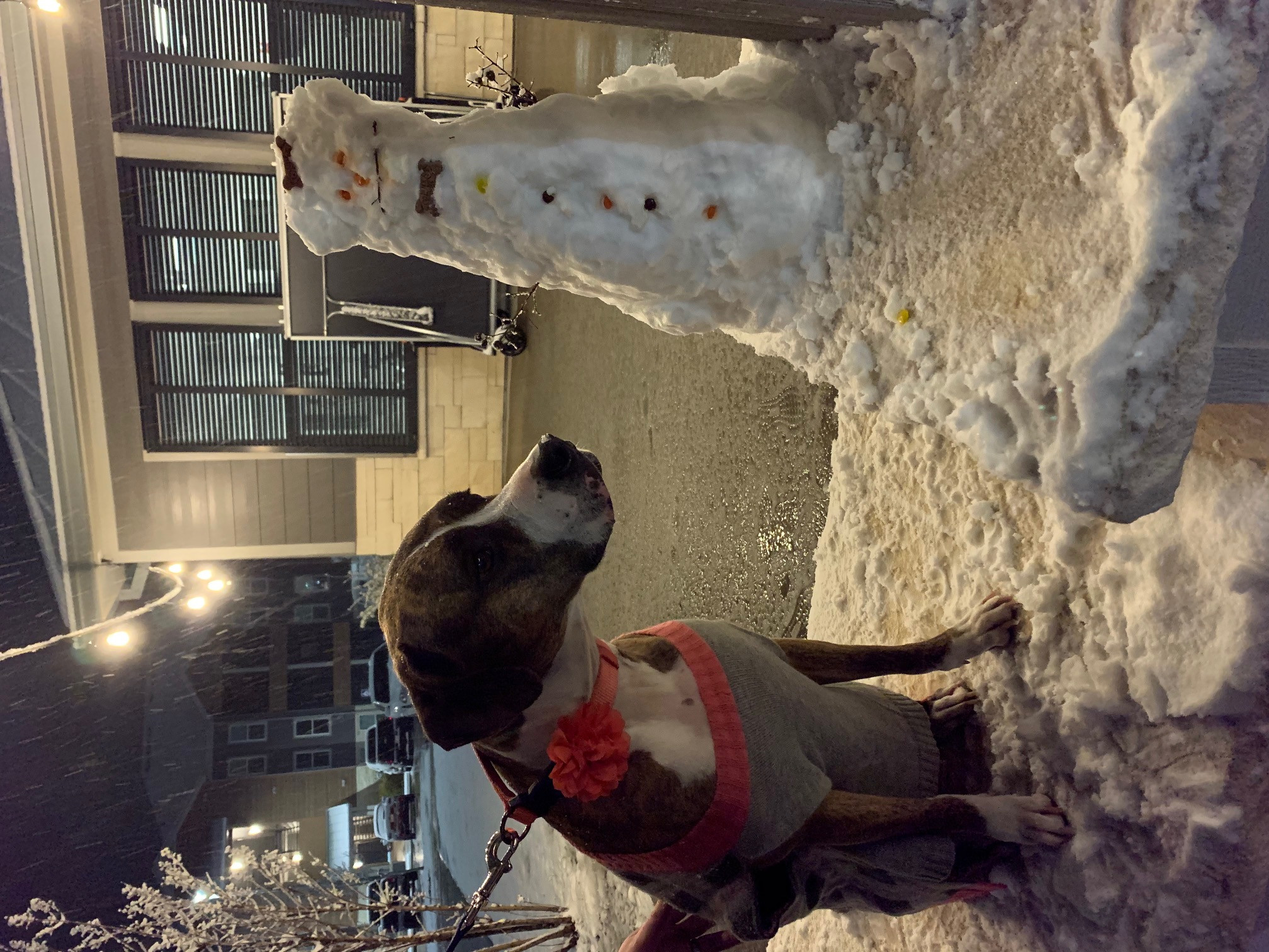 Melissa Armonstrong's dog Mara wants to know how the snowman got her dog treats (photo uploaded sideways)